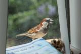 Bird on the Window Sill