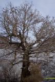 Tree Near Moab Ut.jpg