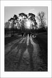 Shadows de Vincennes (4)
