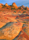 Lichen encrusted rocks, North Coyote Buttes, AZ