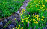 (PNW7) Mount Lassen stream, CA