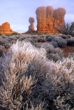 (METE86) Rime ice on sage brush, Arches National Park, UT