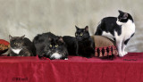 The Four Cats