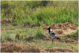 Birds and Animals from the Republic of South Africa/Limpopo Province: 2009
