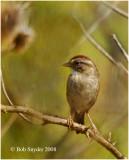 Birds at Curtin Wetland, near Curtin Village, PA