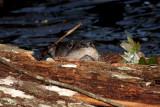 Otter Peek
