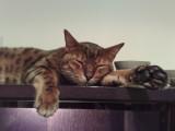 jasper-make yourself at home!