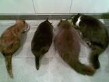 four cats(Yasmin, Cleo, Marley and Teddy)