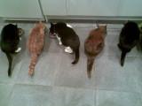 five cats(Tom, Sam, Ziggy, Yasmin and Cleo)
