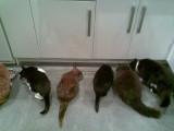 six cats(Sam, Ziggy, Yasmin, Cleo, Marley and Teddy)