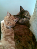 two cats( Sam and Yasmin)