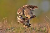 Florida Wildlife Blog 2010
