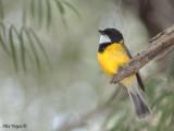 Birds by WA Sites