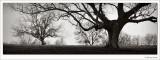 Trees and Fog, Washington County