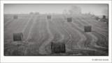 Hay Bales and Fog, Washington County