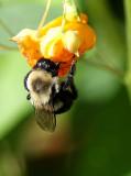 Bee nice today!