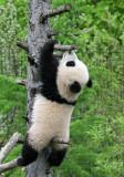 Fu Long loves to climb