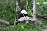 Yang Yang on the swing