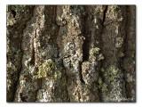 bark / Baumrinde