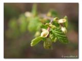 springtime ;-)    /   Frühling ;-)