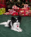 2009 Christmas at Carl and Priscila's