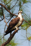 Florida Everglades Feb 2008