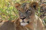 South Luangwa NP,  Zambia  August 2009