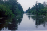 Flotilla 3 - alligators in the Suwanee Canal, Okefenokee