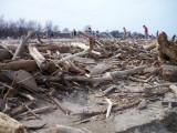 Log piles on beach