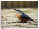 Vogels  -  Birds a t/m z