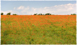 Poppyfield, Hillesley, Glos.