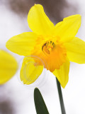 Daff by any other name
