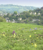 Pyramid orchid and cowslips, Brimscombe