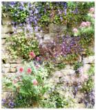 Bellflower wall