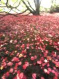 Maple-leaf Carpet