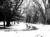 Stark Winter