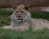 A Day At The Tulsa Zoo