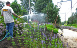 Watering new planting