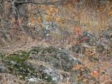 orange leaves and mossy rocks