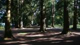 Cedars Blue Mt. Park.jpg