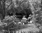 A Spring day in the park