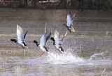Wheeler Wildlife Refuge - 12/10/2009