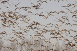 Wheeler Wildlife Refuge - 01/06/2010
