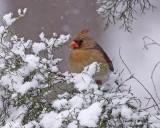Snow Day - 02/12/2010