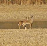 Wheeler Wildlife Refuge - 02/25/2010