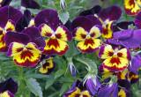 Birmingham Botanical Garden -04/27/2010