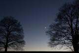 Moonlight between the trees