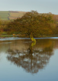 Floods in the Culm Valley