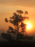 Central Florida sunrise