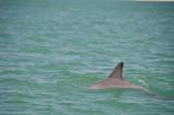 Dolphin curve
